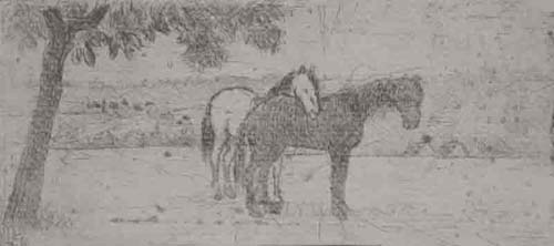 Two Horses in a Field