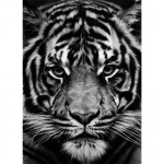 * Untitled (Tiger) - click to enlarge