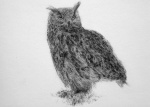 Eagle Owl - click to enlarge