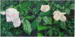 White Roses - click to enlarge