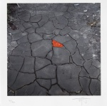 Red leaves on cracked earth - click to enlarge