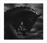 Untitled (Bucephalus) - click to enlarge
